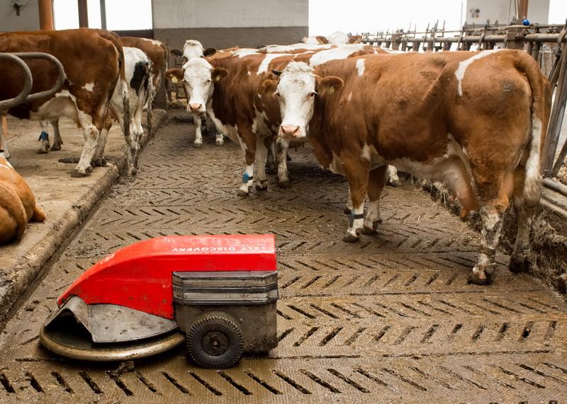 Spaltenroboter: Zu einer guten Stallhygiene gehört eine regelmäßige bzw. automatisierte Reinigung der Laufflächen