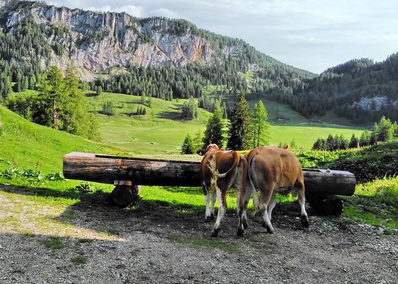 Viele Landwirte achten nicht nur mehr darauf, wie viel Wasser ihren Rindern zur Verfügung steht, sondern auch in welcher Qualität