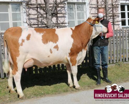 ZV Maishofen 25.03.2021 WABAN-Tochter von Salzmann, Unterdilling, Maishofen